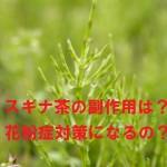 【スギナ茶の副作用】妊婦はダメ?花粉症対策の嘘ホント