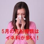 【5月の花粉の種類】花粉症はスギ以外にイネ科にも注意!